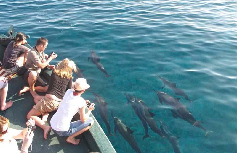 Bạn có thể ngắm cá voi và cá heo ở bờ biển phía Tây của Vancouver