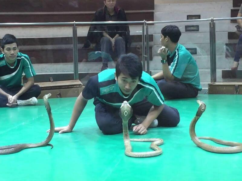 Kết quả hình ảnh cho trung tâm nghiên cứu rắn độc của Hoàng Gia Thái Lan